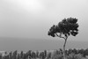 Waiting (Shojib77) Tags: bangladesh tree seasky sea coxsbazar himchori nature canon lightroom colors black white ocean oceanside traveling mountain pickofmountain beautifulnature raw 1855mm