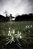 Bucaneve (Puma 68) Tags: canonef1635mmf28liiusm cimiteri carso guerra primaguerramondiale wwi war grandeguerra graveyard osevljek cimitero slovenia bucaneve fiori