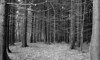 Whispering trees (Rosenthal Photography) Tags: rodinal15020°c11min landschaft bnw schwarzweiss anderlingen 35mm asa400 ff135 weg winter städte wald bw 20180201 olympus35rd analog ilfordhp5 dörfer siedlungen landscape nature mood february forest trees way path trail track pathway olympus olympus35 35rd fzuiko zuiko 40mm f17 ilford hp5 hp5plus redfilter filter red rodinal 150 epson v800