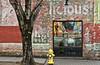 Dog Dream (hutchphotography2020) Tags: tree hydrant oldbrick sidewalk nikon