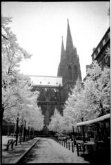 Blanche neige et noire ville (Corinne Chosson) Tags: neige arbres clermontferrand contraste cathédrale noiretblanc foma