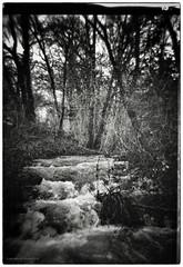 Between Parisot and Vignasse (AJ Mitchell) Tags: grain holga 120film rollfilm ilforddeltaiso3200 labonnette stream bw undergrowth lofi lomo lomography