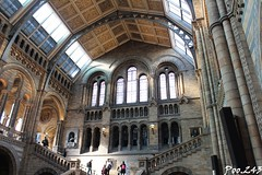 Museum of natural history (Poo.243) Tags: london londres ville city architecture angleterre royaume uni england united kingdom great britain grande bretagne museum natural history musée histoire naturelle musee