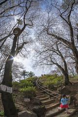 Mt.Hakone in spring (B Lucava) Tags: tokyo waseda toyamapark spring cherryblossom tree sky fisheye step mthakone hill hakoneyama