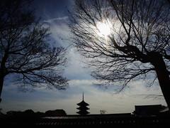 Sunny Winter Day To-ji Temple KYOTO (atria2718) Tags: japan nippon kyoto toji temple winter sky cloud sun silhouette tree wood 日本 京都 東寺 五重塔 冬 冬晴れ 空 雲 light