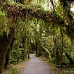 New Zealand forest thumbnail