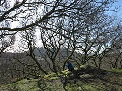checking phone (squeezemonkey) Tags: northwales snowdonia winter castlestafftrip tremadog craigpantifan uppertier crag trees landscape