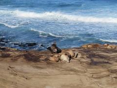 La Jolla Cove (biped_808) Tags: lajollacove sandiego sealions sealion nature