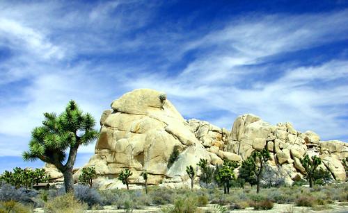 Joshua Trees & Rocks, J. Tree NP 4-13