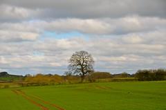 Not the sunniest Easter on record (Ugborough Exile) Tags: gnosall stafford staffordshire midlands england uk d7000 nikon 2018 trees treesdiestandingup