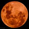 SUPER BLOOD BLUE GIBBON MOON-RISE - 31 January 2018 _ (Raphael de Kadt) Tags: moon lunar bloodmoon supermoon moonrise night eclipse 31january2018 fujinonxf100400mm fujifilmxt2 gauteng blairgowrie johannesburg southafrica sandton