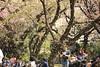 2018さくら 12 (sunuq) Tags: canon eos 5dsr ef300mm llens さくら 桜 2018 東京 日本 japan tokyo blossom flower 小石川植物園 桜吹雪