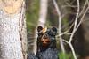 My Buddy (tripod_treker) Tags: wren bird woodcarving bear tree bark buddys