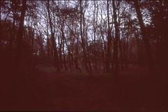 (✞bens▲n) Tags: pentax lx velvia 100 at200 fa 31mm f18 limited film analogue slide japan nagano trees dark