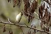 007 (alfredo2057) Tags: alfredo arbol senderismo nido vegetacion pajaro nikon navarra peralta otoño color monte campo