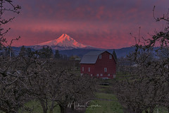Mt Hood Sunrise (NikonDigifan) Tags: mthood oregon pacificnorthwest farming orchards sunrise dawn redbarn barn landscape photography nikond750 nikon tamron tamron7020028 tkactions mikegassphotography