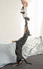 Amendoim (Walison Jorge) Tags: pet basset