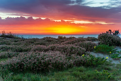 _DAH6990.jpg (David Hamments) Tags: backbeach wa flowers bunbury sunset fantasticnature ngc