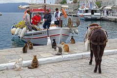 Hydra - life in the harbor (Nikolaos Gavrilakis) Tags: gavrilakis nikon d7000 greece hydra island cat fish boat fishermen harbor γάτα λιμάνι ψαράδεσ βάρκα νησί ύδρα