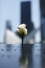 Solitude (AlbertoBaioschi) Tags: love manhattan 911 flower architecture grief twintowers tower rose newyork