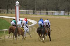 "2018-04-07 (43) r3 headed into the first turn (JLeeFleenor) Tags: photos photography md marylandhorseracing racing maryland marylandracing laurelpark jockey جُوكِي ""赛马骑师"" jinete ""競馬騎手"" dżokej jocheu คนขี่ม้าแข่ง jóquei žokej kilparatsastaja rennreiter fantino ""경마 기수"" жокей jokey người horses thoroughbreds equine equestrian cheval cavalo cavallo cavall caballo pferd paard perd hevonen hest hestur cal kon konj beygir capall ceffyl cuddy yarraman faras alogo soos kuda uma pfeerd koin حصان кон 马 häst άλογο סוס घोड़ा 馬 koń лошадь outside outdoors"