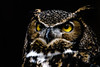Wiser's (SurgeB) Tags: raptor prey magnificence predatory avian great flight ornithology soar owl mountsberg milton ontario bird black background a6000 sony telephoto sel50210 raptors follow4follow
