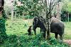 Trust (D. R. Hill Photography) Tags: thailand asia southeastasia thai elephant animal sanctuary phuketelephantsanctuary elephants travel phuket jungle nikon nikonfe2 fe2 helios helioslens helios81h mchelios81h50mmf2 50mm primelens fixedfocallength manualfocus russianlens film analog 135 35mmfilm fuji fujifilm fujipro400h pro400h nature wildlife