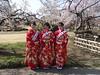 Ume Musume (Shutter Chimp: Im back!) Tags: people woman women japan japanese kimono ume tree blossom park mito kairakuen 水戸 偕楽園 梅祭り 着物 梅娘 女性 梅 木 茨城 日本