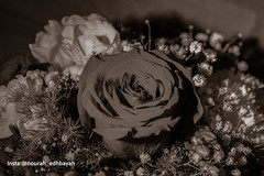 Golden Day (Nourah.A.Edhbayah (Super Flower♥إظبيه)) Tags: nourah abdullah edhbayah q8 kuwait نوره عبدالله اظبيه