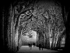 Coimbra parque (verridário) Tags: coimbra parque people mono monochrome preto branco bw black white bianco negro arvore street rua sony