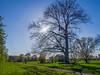Monheim - Landschaft am Rheindamm (KL57Foto) Tags: 2018 april frühling germany kl57foto monheim monheimamrhein nrw natur nordrheinwestfalen olympus penemp2 baum bäume trees