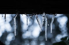 Icicles in Lake Arrowhead, California (ChrisGoldNY) Tags: challengewinners challengefactory chrisgoldphoto chrisgoldny chrisgoldberg forsale licensing bookcovers bookcover albumcover albumcovers sonyalpha sonya7rii sonyimages sony california socal cali lakearrowhead snow winter frozen freeze
