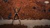001/365 - Net-Caster Spider (4k) (RWGJ) Tags: 105mmf28 169 16x9 4k 58af2 black brick brown color colour d4s dslr dusk evening fx105mmf28 flash gray hd horizontal landscape macrophotography mecablitz metz metzwerke netcasterspider nikkor nikon nikond4s nikonfx105mmf28 orange outdoor red speedlight summer twilight uhd ultrahighdefinition vignette wallpaper wallpaper169