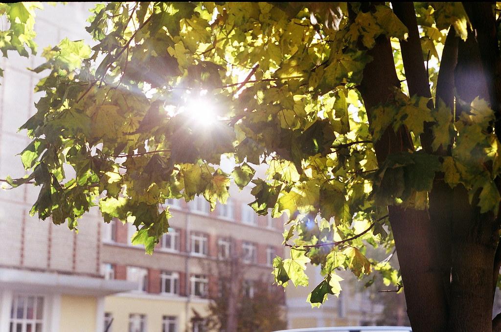 фото: Солнце в листьях клёна