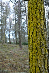 Yellow (BurnThePlans) Tags: woods forest trees nature outdoors walk scotland highlands