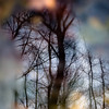 Trees In Water 123 (noahbw) Tags: d5000 dof nikon abstract blur branches cold depthoffield forest freezing frozen landscape leaves natural noahbw ravine reflection silhouette square stream trees water winter woods treesinwater