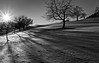 Winter Impression (jotxam) Tags: badenwürttemberg deutschland gegenlicht germany landscape landschaft schwäbischealb backlight blackandwhite bw dramatic dramatisch schwarzweis silhouette sw