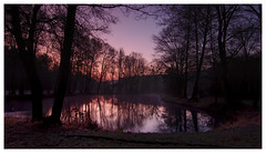 Calm Morning (Max Angelsburger) Tags: silhouette lake mirror deutschland germany badenwürttemberg badenwuerttemberg grosglattbach village natur light dawn dark mood wald wood wanderlust hiking exposure view bench wooden countryside landscape landschaft damp march 2018 weather walk pretty spring purple red pink blue sky mystic nature calm night tree atmosphere weekend valley soft freezing crisp morning crispy naturereserve romantic silence grass duck grosglattbacherriedberg see seen entensee teich tümpel weiher