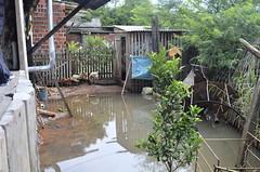 Enfoque Unisinos Barrinha/Campo Bom (_DSC038) (milenariboli) Tags: água galinha galinhas enchente animais