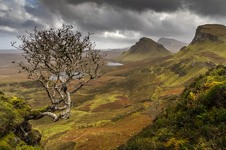 Quiraing Tree, Ile de Skye.