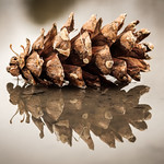 Pine Cone's Reflection thumbnail