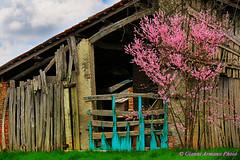 Primi colori di primavera (Gianni Armano) Tags: colori di primavera foto gianni armano photo flickr