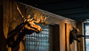 Buck and Bear at Tom & Jerry's - NYC (ChrisGoldNY) Tags: chrisgoldphoto chrisgoldny chrisgoldberg sonyalpha sonya7rii sonyimages sony newyork nyc newyorkcity albumcover bookcover buck bears taxidermy stuffed animals wallmounted bars eater tomandjerrys interior tomjerrys decorations hunting decor beasts mammals
