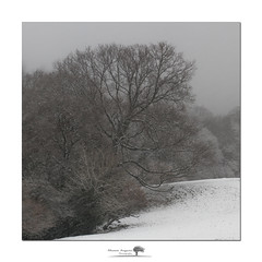 Swept (shaun.argent) Tags: woodland woods trees tree winter weather seasons shaunargent snow snowfall easter flora nature yorkshire