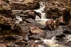 Falls of Falloch (travellingred) Tags: scotland unitedkingdom gb loch waterfall lomond trossachs uk landscape longexposure