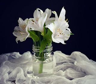 White Peruvian Lilies