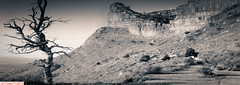 Mesa Verde, Colorado (DelioTO) Tags: 6x17 curved desert f267 f317 fall holiday landscape natparks panoramic pinhole rpx100 trails trip usa