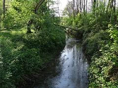 """Der Bach. Die Bäche. Einen kleinen Fluss nennt man Bach. Hier ist die Biegung eines Baches zu sehen. Eine Biegung ist eine Kurve. • <a style=""""font-size:0.8em;"""" href=""""http://www.flickr.com/photos/42554185@N00/41330306572/"""" target=""""_blank"""">View on Flickr</a>"""