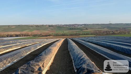 Spargelanbau im Selztal bei Stadecken
