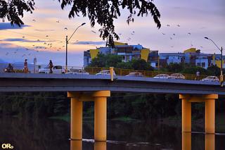 Herons over bridge at sunset